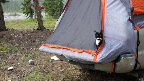 camping-chat-2