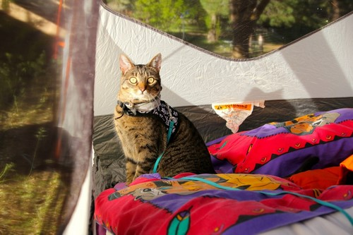 camping-chat-3