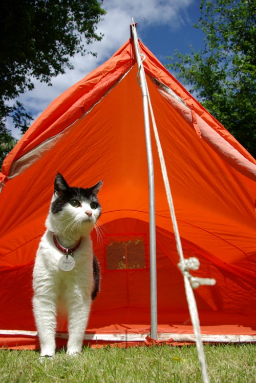 camping-chat-6
