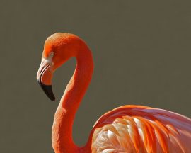 flamingo-bird-pink-tropical-64002