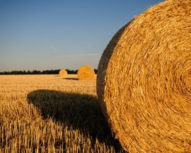 straw-bales-stubble-summer-straw