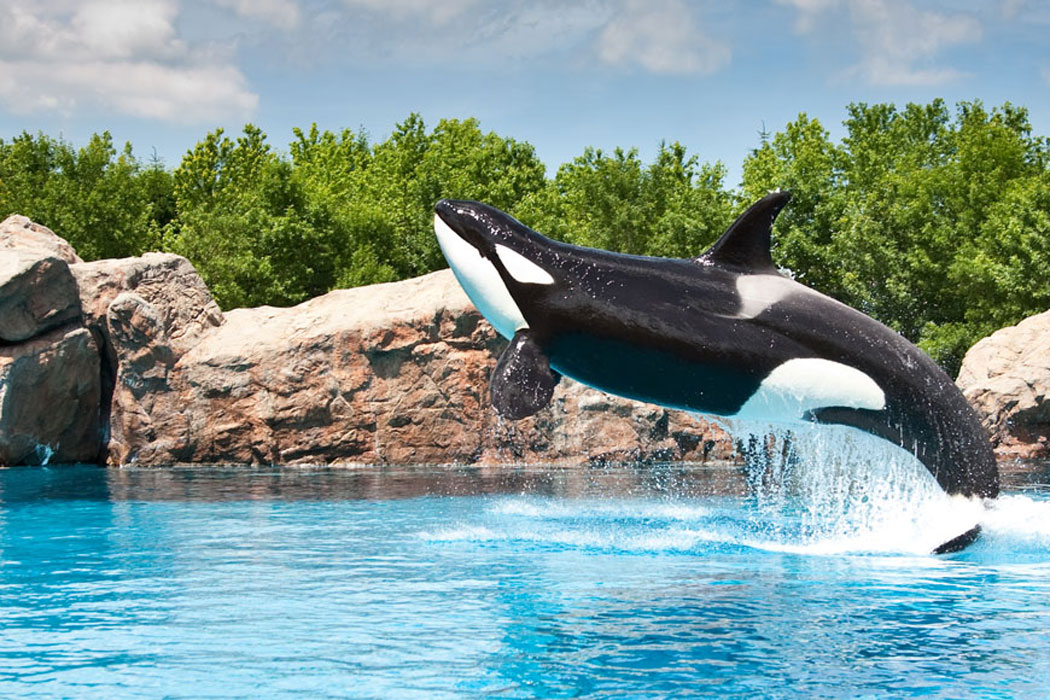 Orque Marineland